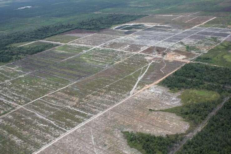 2020 Ontbossing palmolie
