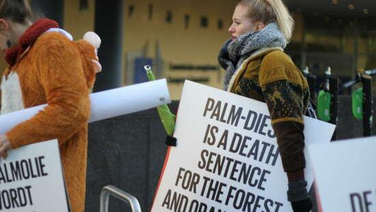 2020 Ontbossing palmolie4