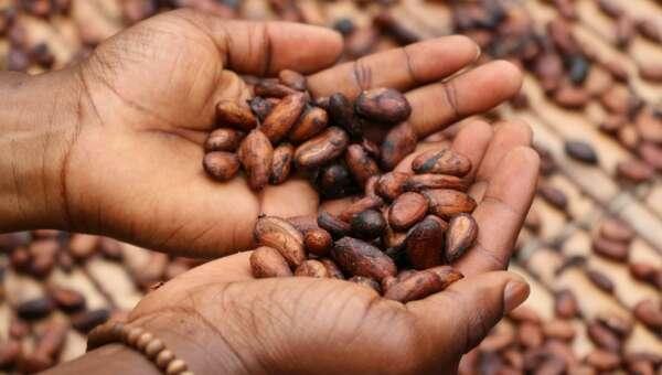 2020 Cacao Unsplash