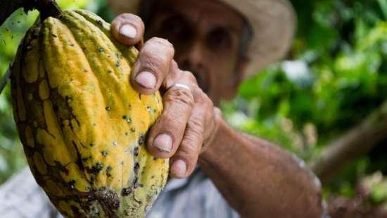 Cocoa-man-colombia-peasant-50707