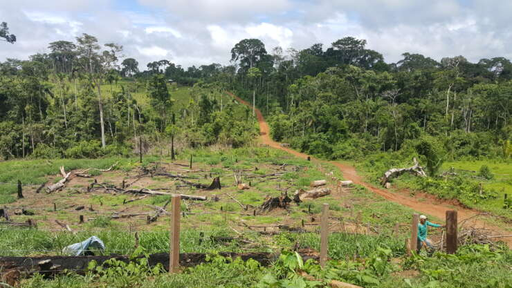 Deforestation Chico Mendes Extractive Reserve Acre Western Amazon Brazil Luciana Duarte