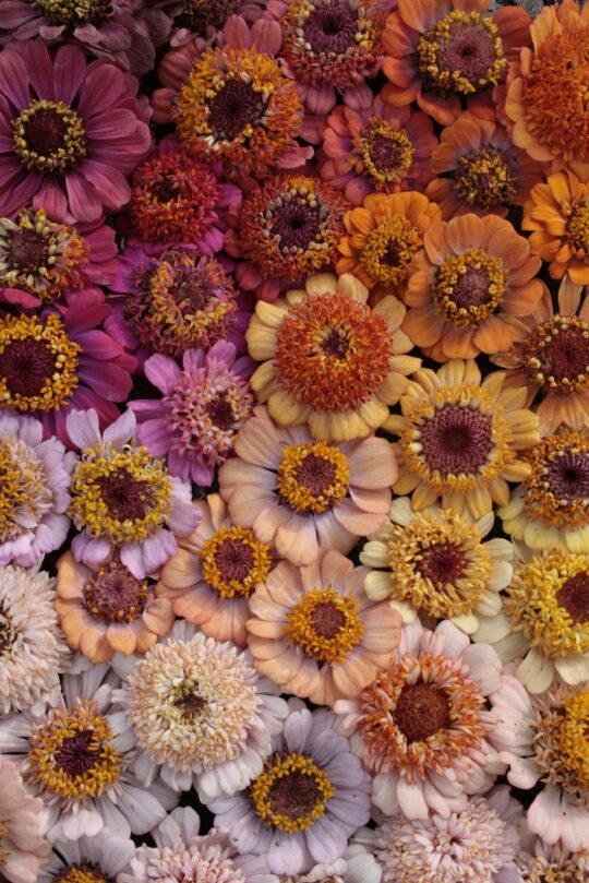 Fleur couleur 09