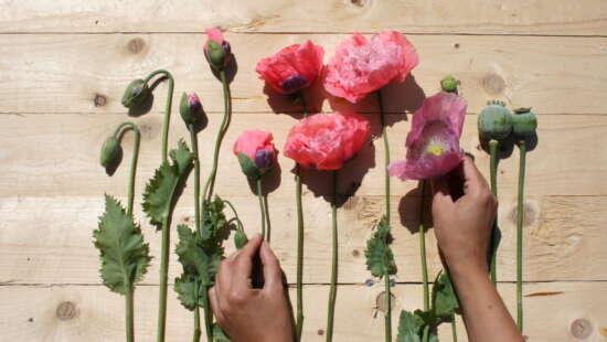 Fleur couleur 10