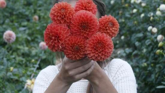 Fleur couleur 04