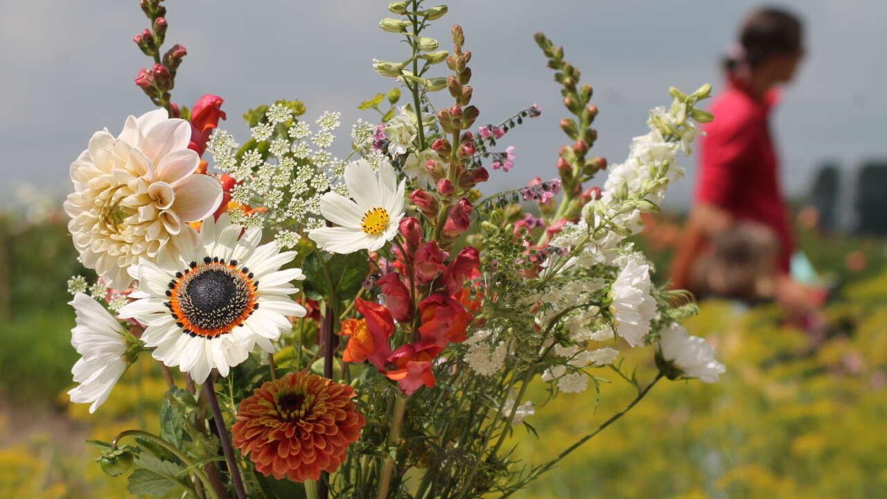 Fleur couleur 08